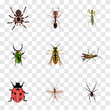 Realistic Bee, Emmet, Tarantul...