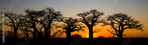Baobab Sunset in Savute Botswana