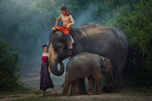 Man And Woman With Elephant An...