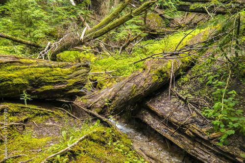 Fototapeten Wald Tree Green