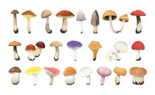 Edible Mushrooms Set.