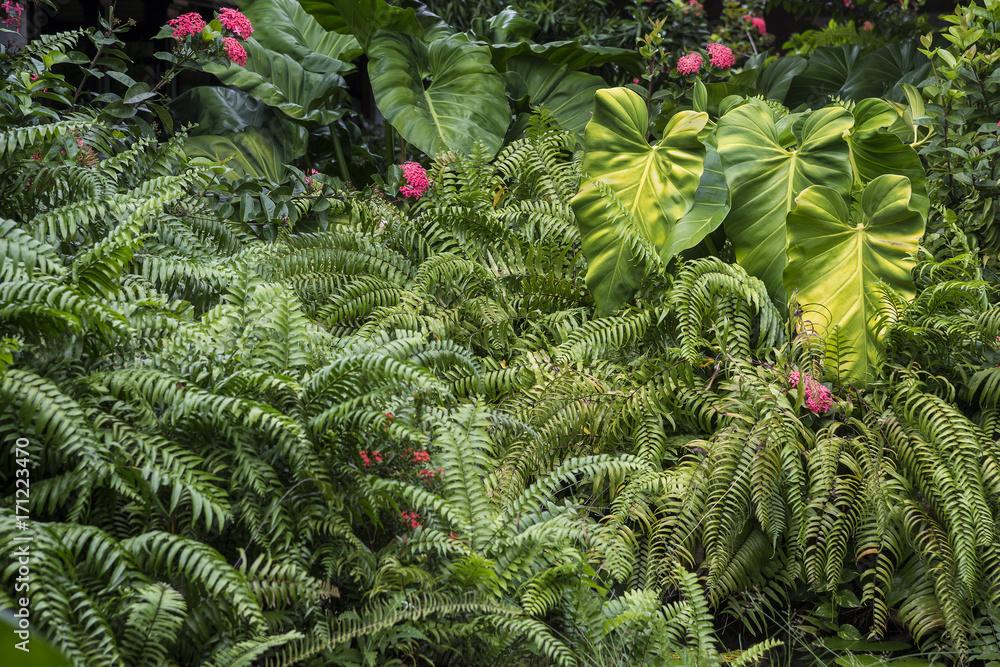 Fototapety, obrazy: Green vegetation in the summer flowers and leaves