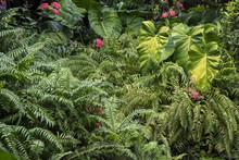 Green Vegetation In The Summer...