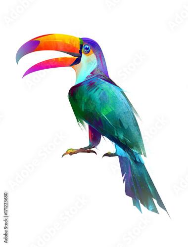 kolorowy-tropikalny-ptak-tukan