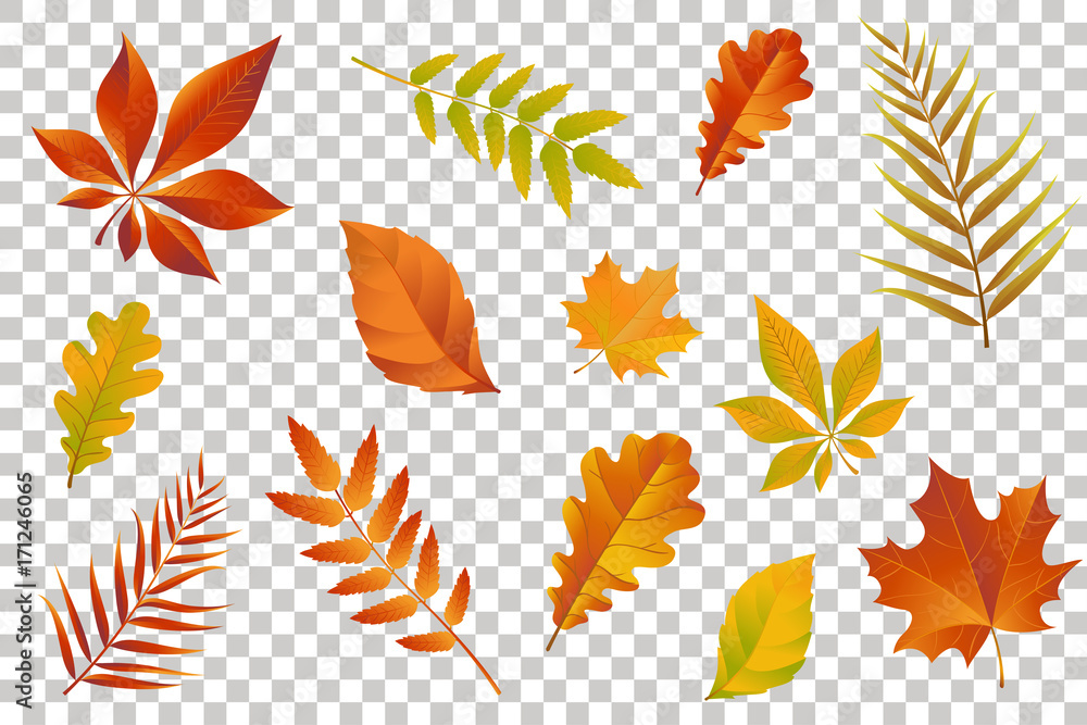 Fototapeta Autumn falling leaves isolated on transparent background. Vector illustration.