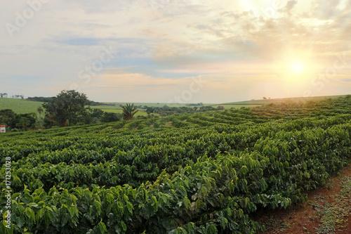 Plantation - Sundown on the coffee plantation landscape Canvas Print