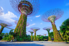 Gardens By The Bay At Singapore
