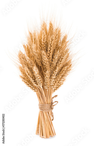 Poster Graine, aromate Bushy sheaf of wheat isolated on white background
