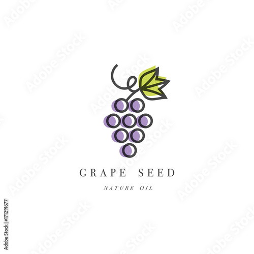 Vector set of packaging design element and icon in linear style - grape seed oil Fototapete