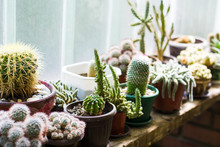 Potted Cactus Plants Next To  ...