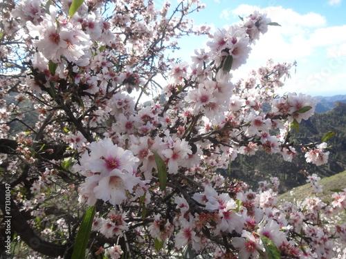 Plakat Migdałowy kwiat na szczycie