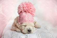Newborn Puppy Of A Golden Retriever In A Pink Hat With A Pompon Is Sleeping On A White And Pink Plaid