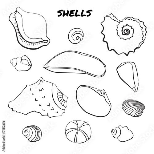 Papiers peints Cartoon draw Set of hand drawn shells