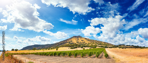 Photo  Panoramic view of a beautiful Vineyard in autumn before the harvest