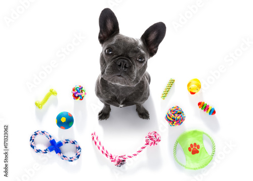 Aluminium Prints Crazy dog dog with pet toys