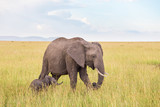 Elephant calf walking with his mother in the savanna