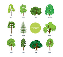 Concept Of Collection Of Modern Different Kinds Of Trees.