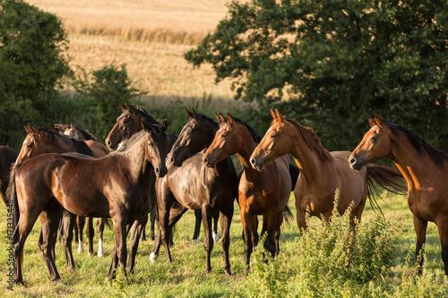 Photo  Pferdeherde