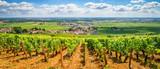 Vineyards of Burgundy, France - 171338682
