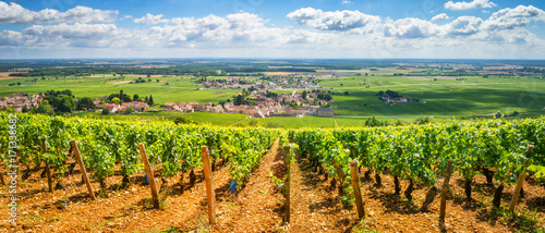 Photo sur Toile Vignoble Vineyards of Burgundy, France