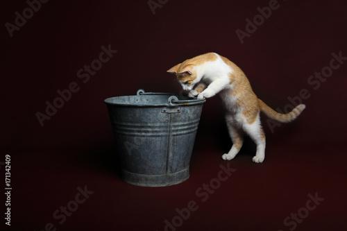 Valokuva  Gatto curioso secchio