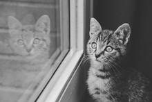 Chaton Tigré Tabby Dans Intérieur Maison Avec Reflet Dans Une Fenêtre