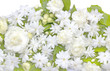 Jasmine flowers refreshing