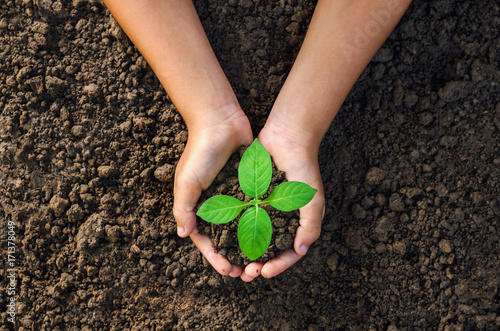 In de dag Planten hand holding young plant for planting in soil concept green world