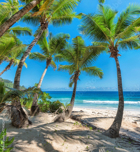 Coconut Palm trees on white sandy beach in Caribbean sea,