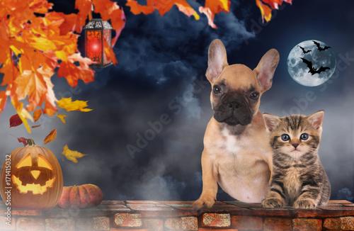 Deurstickers Franse bulldog Small cat and dog sitting beside pumpkin - halloween
