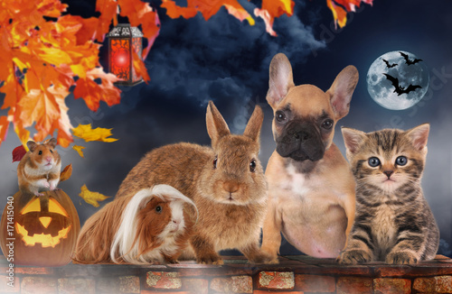 Deurstickers Franse bulldog A group of different pets on halloween