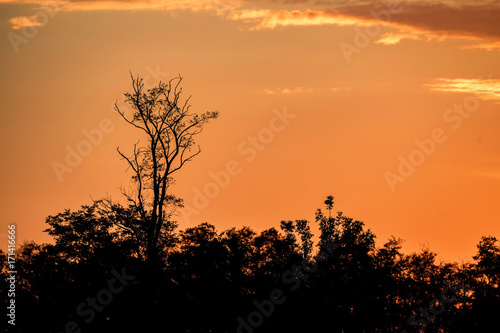 Poster Oranje eclat Sunrise tree silhouettes with orange dramatic sky