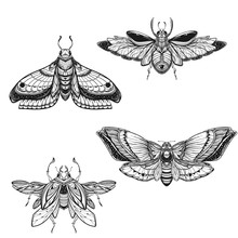 Beetle Bug Tattoo Drawing Set. Scarab Bug Illustration