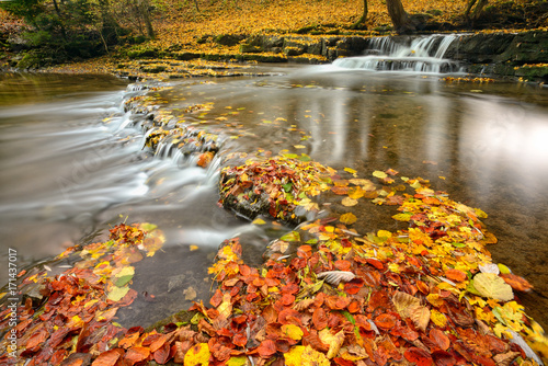rzeka-z-malymi-wodospadami-pokrytymi-kolorowymi-jesiennymi-liscmi