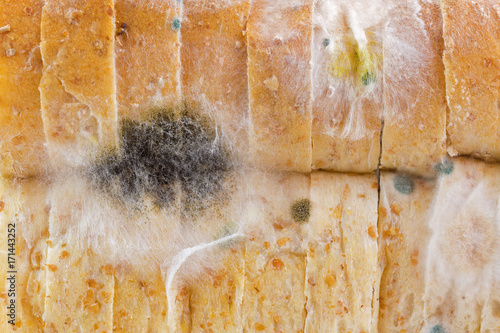 Fotografija  Closeup texture of black yellow blue white molds on molded old bread