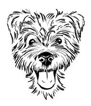 Dog Breed Terrier Portrait