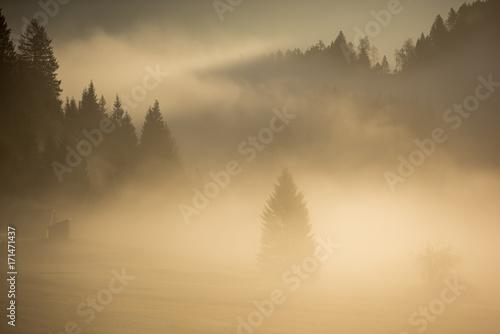 poranne-swiatlo-nad-lasem