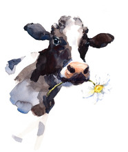Watercolor Cow With A Daisy Fl...