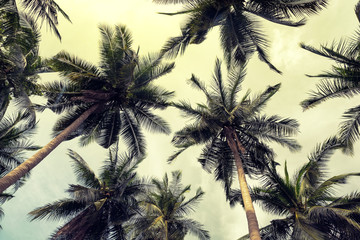 Fototapeta Coconut palm trees perspective view