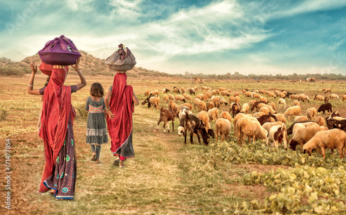 group rural girl going back to there house with flock of sheeps Tableau sur Toile