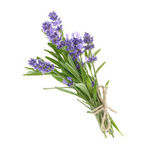 Bunch Of Lavender Flowers Isol...
