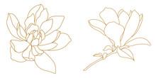 Set Of Golden Graphical Magnolia Flower. Vector.