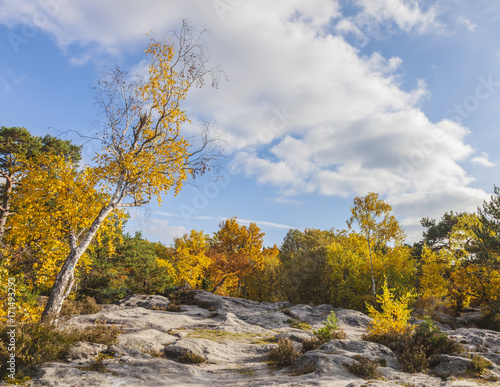 Foto op Canvas Herfst Forest of Fontainebleau