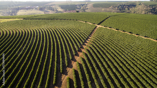 Photo  Aerial view coffee plantation in Minas Gerais state - Brazil