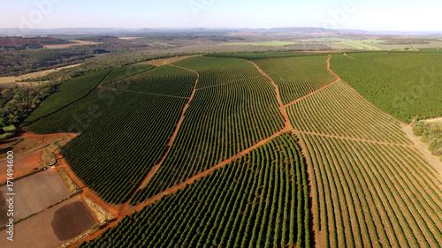 Fotografía Aerial view coffee plantation in Minas Gerais state - Brazil