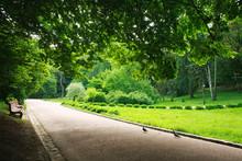 Pedestrian Path In Summer Gree...