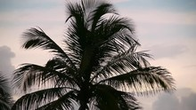 Tropical Palm Tree Silhouette ...