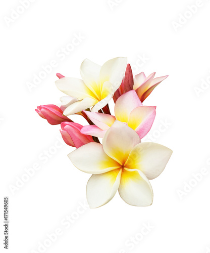 Photographie Tropical frangipani flower isolated on white background