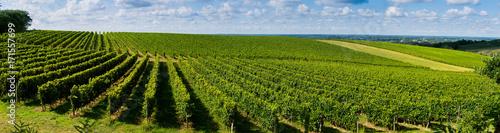 Photo sur Aluminium Vignoble Sunset, Landscape, Bordeaux Wineyard, France