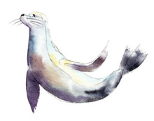 Watercolor Seal,  Hand-drawn Illustration Isolated On White Background.